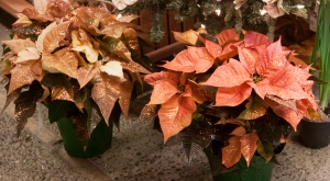Poinsettia_glitter