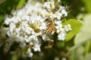 PollinatorBlogBee