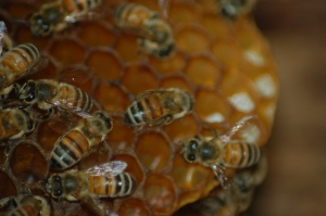 PollinatorBlogBeeHive