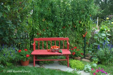 paste-tomatoes-on-red-bench