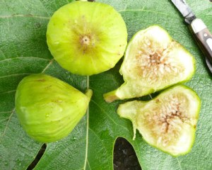 figs-and-leaf
